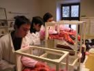 Nácvik inseminace skotu vlaboratoři
